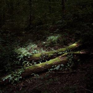 Más allá del bosque
